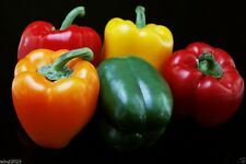 Sweet Bell Pepper,Organic,50 Seeds Mixed Red,yellow,Orange Excellen in Container