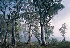 Wandsticker - Fantasie Wald - Foto Riesige Bäume Heim Deko Wohnzimmer