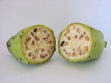 20 Banana Plant Seeds  - Musa balbisiana - Wild Edible Banana