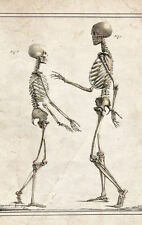 Framed Vintage Medical Print – Small and Tall Skeletons (Picture Poster Anatomy)