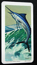 Blue Marlin   Spearfish  Game Fishing   Illustrated Card  # VGC