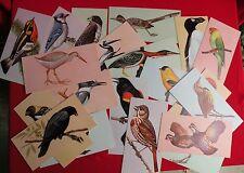 Vtg 1962 Lot 20 Gelles Widmer Bird Cards Pelican Hawk Parakeet Kingfisher