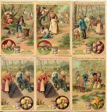 Chromo Liebig Sang. 522 FRA Funghi Commestibili I - Champignons ANNO 1897