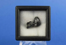 Russian Meteorite, Sikhote-Alin Shrapnel Collectible