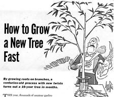Grow A Big Tree Fast--10 Year Tree Grown In Months Garden Yard Plant Shelter #92