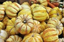 400 Seeds Sweet Dumpling Acorn Squash  new seeds for 2016  Non-GMO  Heirloom