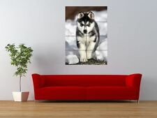 SIBERIAN HUSKY PUPPY CUTE DOG COOL GIANT ART PRINT PANEL POSTER NOR0006
