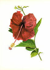 CLARENCE E HALL 1966 Book Print HIBISCUS SINGLE RED Tropical Flower Oil Painting