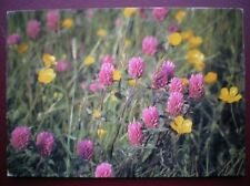 POSTCARD SOCIAL HISTORY RED CLOVER