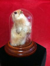 SALE*Taxidermy Baby Chick/chicken in Glass Dome Display-pagan-witchcraft-witch