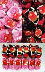 New Wholesale Lot Joe Boxer 150 300 pair Women Cozy Fuzzy Slipper Socks Sz 9-11