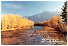 Kettle River British Columbia Postcard Boundary Country Unposted River Trees Mtn