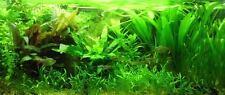 10 POTTED PLANTS POTS MIXED LIVE AQUARIUM AQUATIC TROPICAL FISH WATER MID-GROUND