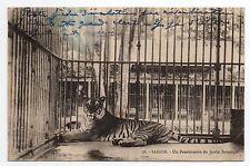 INDOCHINE Cochinchine SAIGON Un tigre pensionnaire du jardin botanique