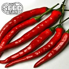 Cayenne Long Slim Pepper Seeds - 50 SEEDS-SAME DAY SHIPPING