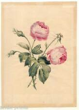 Rosas-Rose-acuarela para 1850 en el tipo de Redouté-Flores