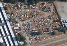 Business For Sale- Classic & Vintage Cars,  All Autos In Wrecking Yard Condition