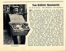 Dott. E. Schultz dal cani di Bruxelles valigia mercato in cui gli animali al mercato... 1906