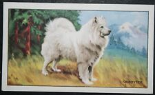 SAMOYED   Original 1930's Vintage Colour Card  # VGC