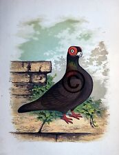 """Fancy Pigeon """" THE BURB  """" By James C. Lyell Poster Art 13"""" X 19"""""""