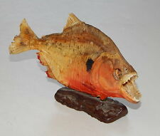 8 Inch Taxidermy Piranha From Venezuela On Stand