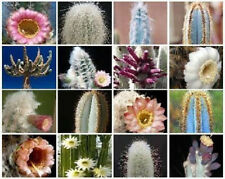 Columnar cacti MIX @ outdoor rare cactus seed 100 SEEDS