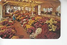 Mums by Farm of Paschke North East PA Penn