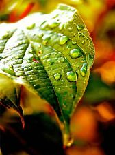 NATURE PHOTO LEAF WATER DROP GREEN POSTER ART PRINT HOME PICTURE BB173A