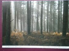 POSTCARD HAMPSHIRE NEW FOREST IN THE AUTUMN