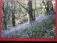 POSTCARD F1-5 YORKSHIRE GREAT AYTON BLUEBELL WOOD NR AIRHOLME FARM