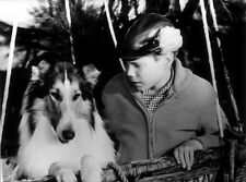 JON PROVOST UNSIGNED PHOTO - 5793 - LASSIE