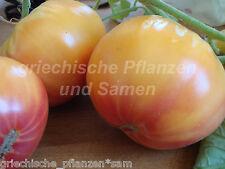 NATURISE RIDDLE Tomate gigante 10 Semillas antiguas