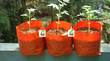 Growth Bag | Nursery Poly Bags for Seeds & Plant - 11 Inch X 11 Inch(20 Nos)