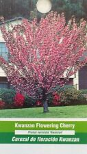 Kwanzan Flowering Cherry Tree Home Garden Plants Landscape Trees Plant Flower