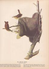 """1942 Vintage AUDUBON BIRDS #83 """"HOUSE WREN"""" Color Art Plate Lithograph"""