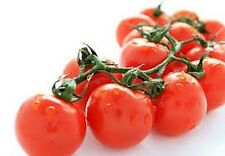 Tomato- Large Red Cherry- 50 Seeds - 50 % off sale