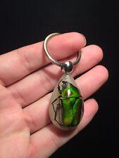 Insecte Cadeau Porte clef avec coleoptére vert dans résine!!brille dans la nuit!