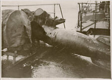 WW2 ORIG. PHOTO - PICTURES OF GERMAN TORPEDOES