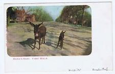 Mama's Baby, First Walk 2 Donkeys Kropp Milwaukee 1905 Redlands CA PC 160