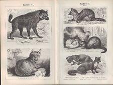 Lithografie 1896: Raubtiere I bis VI. Zobel Dachs Fuchs Wolf Tiger Luchs Hyäne