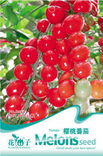 1 Pack 30 Cherry Tomatoes Seeds Red Small Variety Tomato Garden Fruit B040