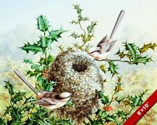 CORAL BUNTING BIRDS NEST IN HOLLY TREE WATERCOLOR PAINTING ART REAL CANVAS PRINT