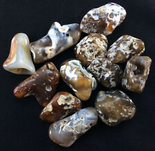 Large Polished Agatized Fossil Coral-1512L, Metaphysical Crystal Balance Tumble