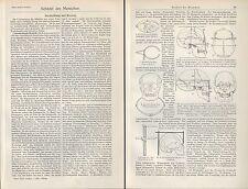 Druck 1907: Schädel des Menschen. Mensch Anatomie Medizin Zirkel