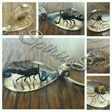 Real Insect Key Ring / Bug KeyChain Resin Scorpion Spiders Crab Keyring