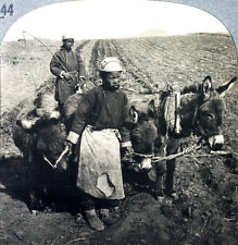 Keystone Stereoview of Chinese Boys Plowing a Field, CHINA from 1930's T600 Set