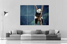 Panda Arroccato On Albero Panda Polo Da parete Arte Poster Grande formato A0