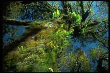 009009 Moss And Fern Covered Tree A4 Photo Print