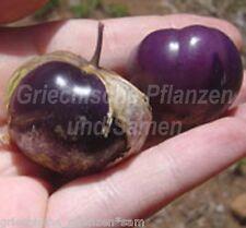 TOMATE * Tomatillo purple 10 frische Samen lila/blau * lecker * süß * exotisch