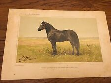 ANTIQUE FRENCH CHROMLITHO PRINT OLIVIER DePENNE PERCHERON HORSE 10.75 x 7.25